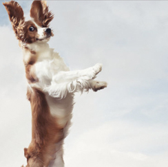 Dog in the air