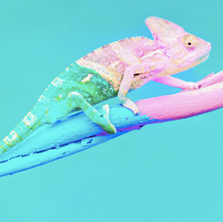 Green and pink lizard